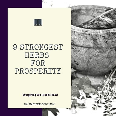 9 Strongest Herbs for Prosperity [Attract Money, Good Luck and More]