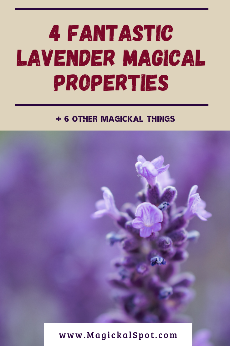 4 Special Lavender Magical Properties by MagickalSpot