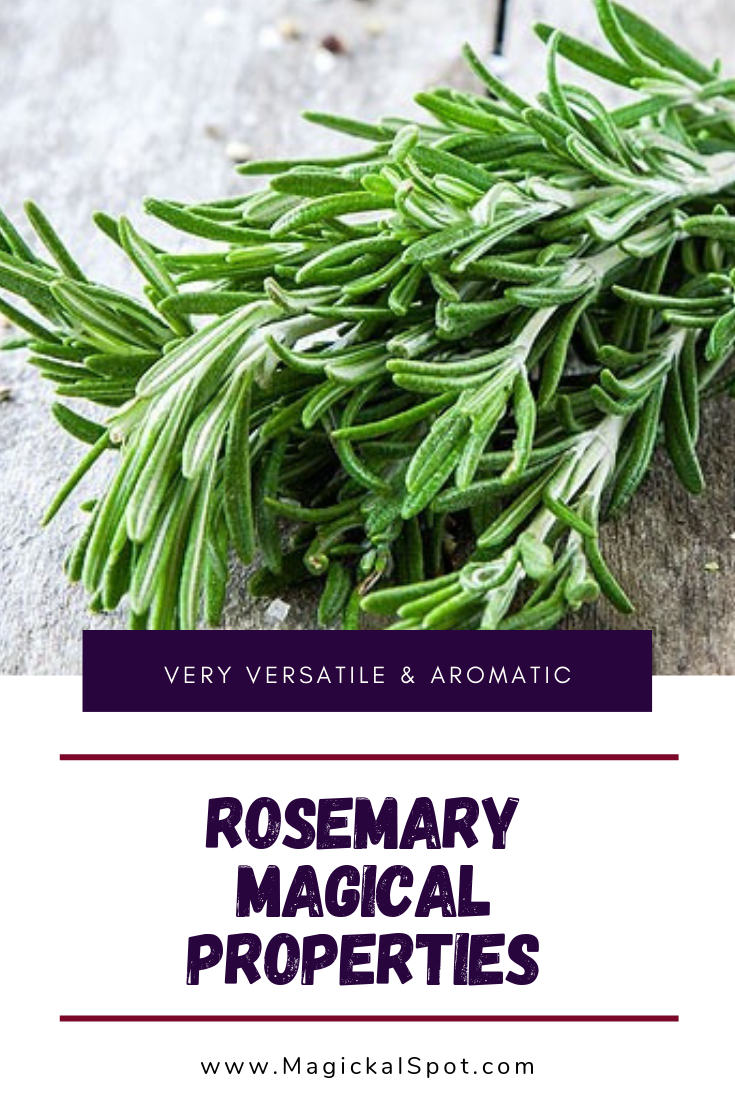 5 Rosemary Magical Properties Explained by MagickalSpot