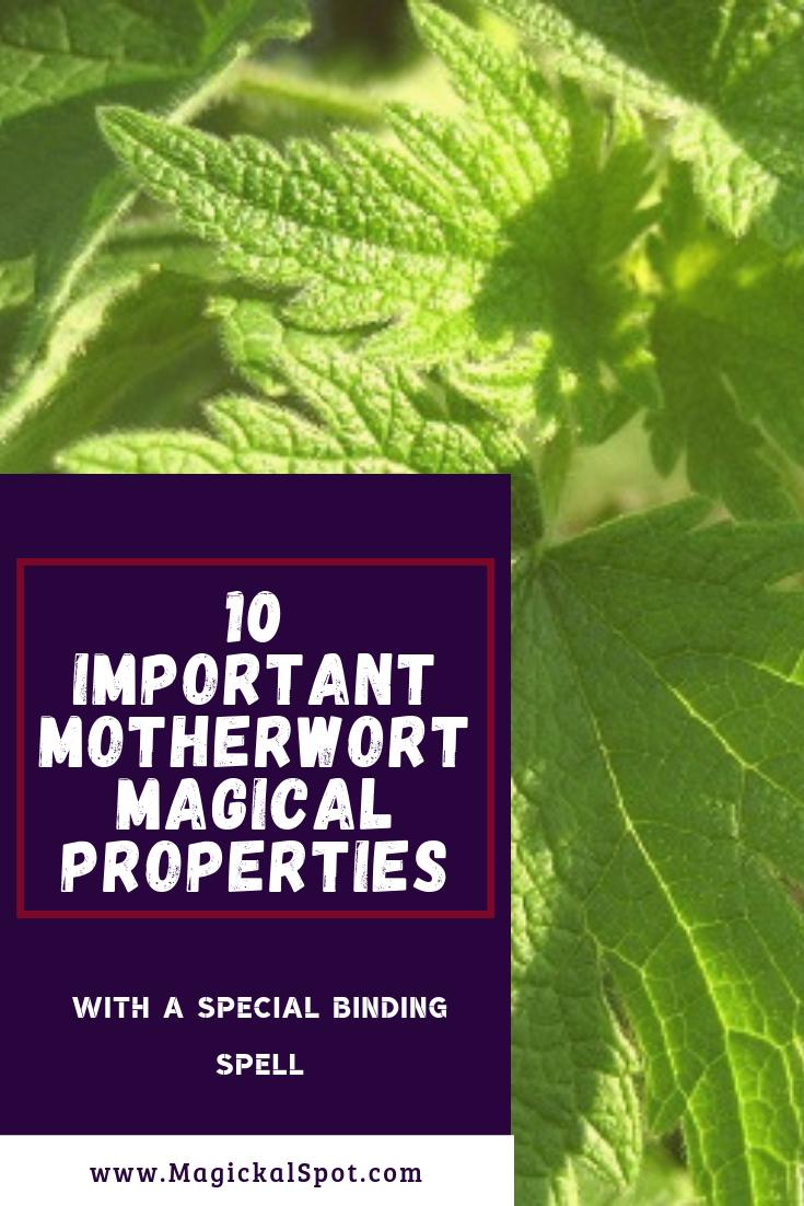 10 Important Motherwort Magical Properties by MagickalSpot