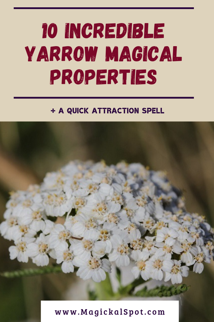 10 Incredible Yarrow Magical Properties by MagickalSpot
