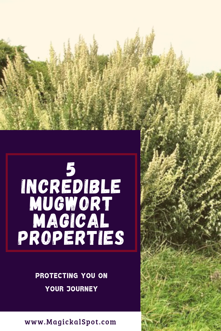 5 Incredible Mugwort Magical Properties my MagickalSpot