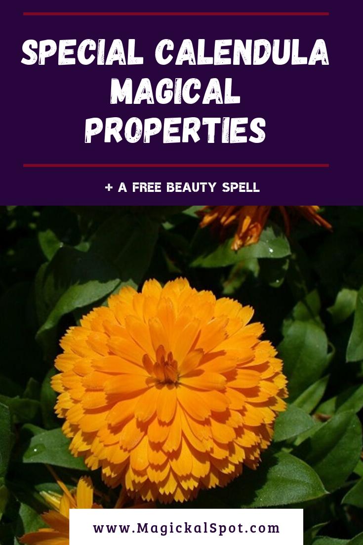 5 Special Calendula Magical Properties by MagickalSpot