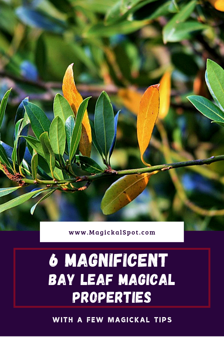 6 Magnificent Bay Leaf Magical Properties by MagickalSpot