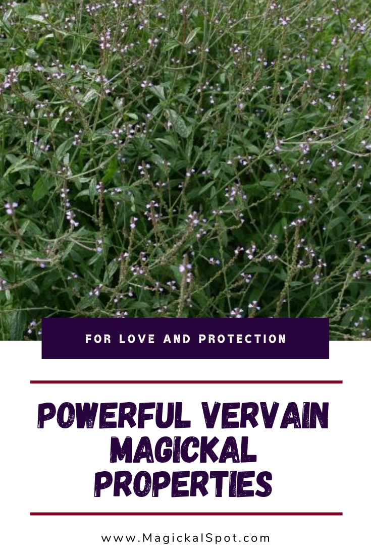 7 Powerful Vervain Magickal Properties by MagickalSpot