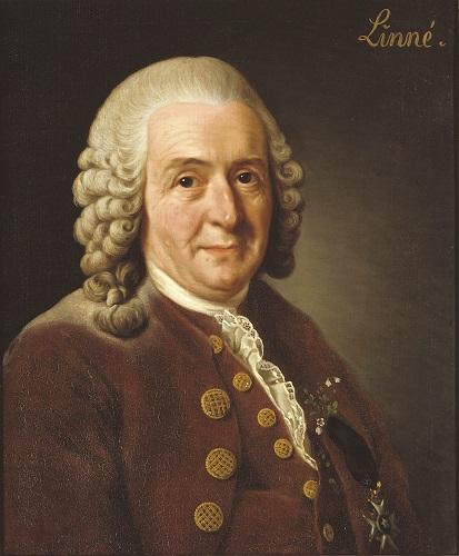 Botanist Carl von Linne