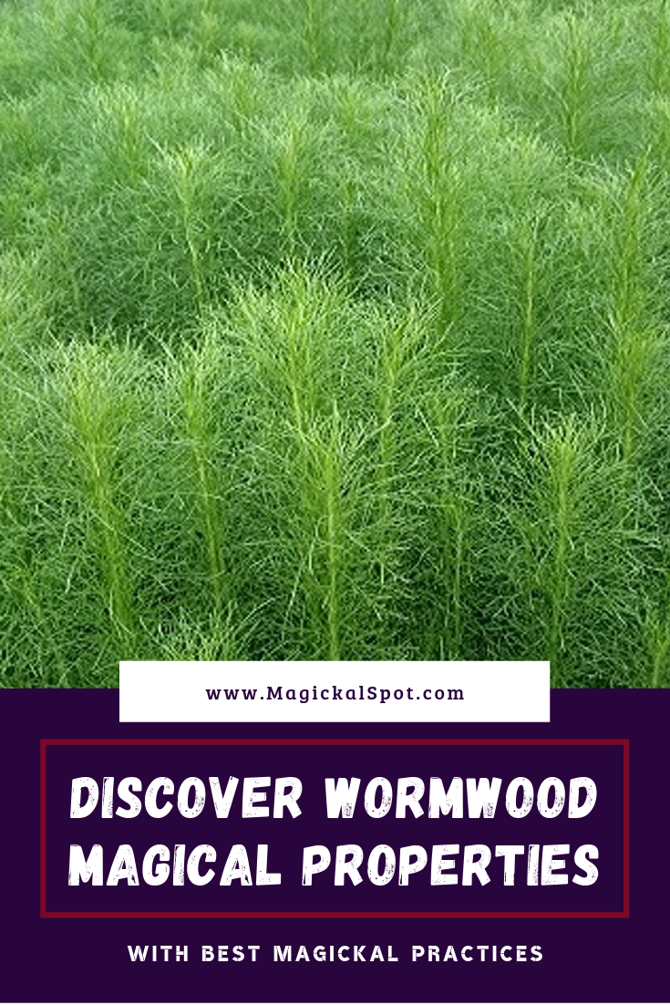 Discover Wormwood Magical Properties by MagickalSpot