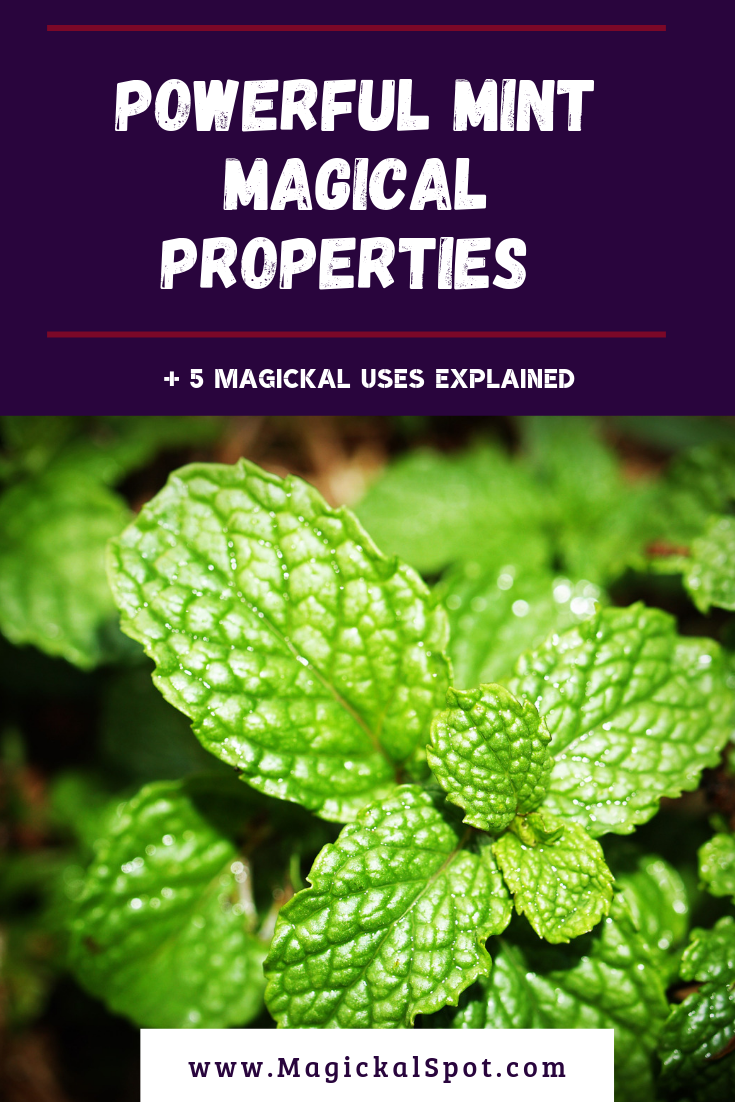 Powerful Mint Magical Properties Explained by MagickalSpot