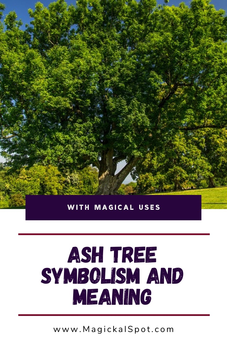 Ash Tree Symbolism and Meaning Explained by MagickalSpot