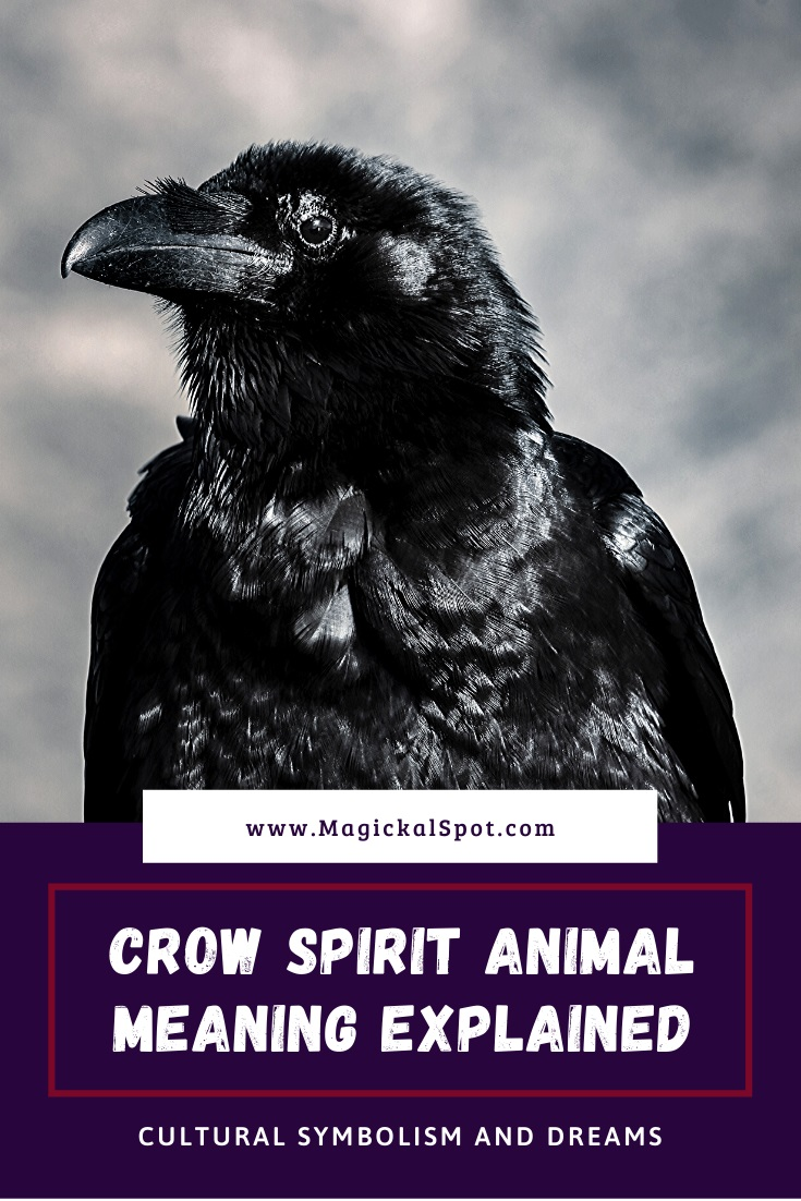 Crow Spirit Animal Meaning Explained Symbolism And Dreams