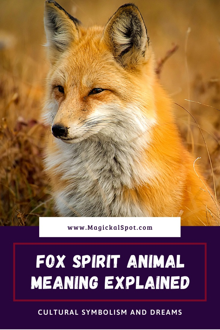 Fox Spirit Animal Meaning Explained by MagickalSpot