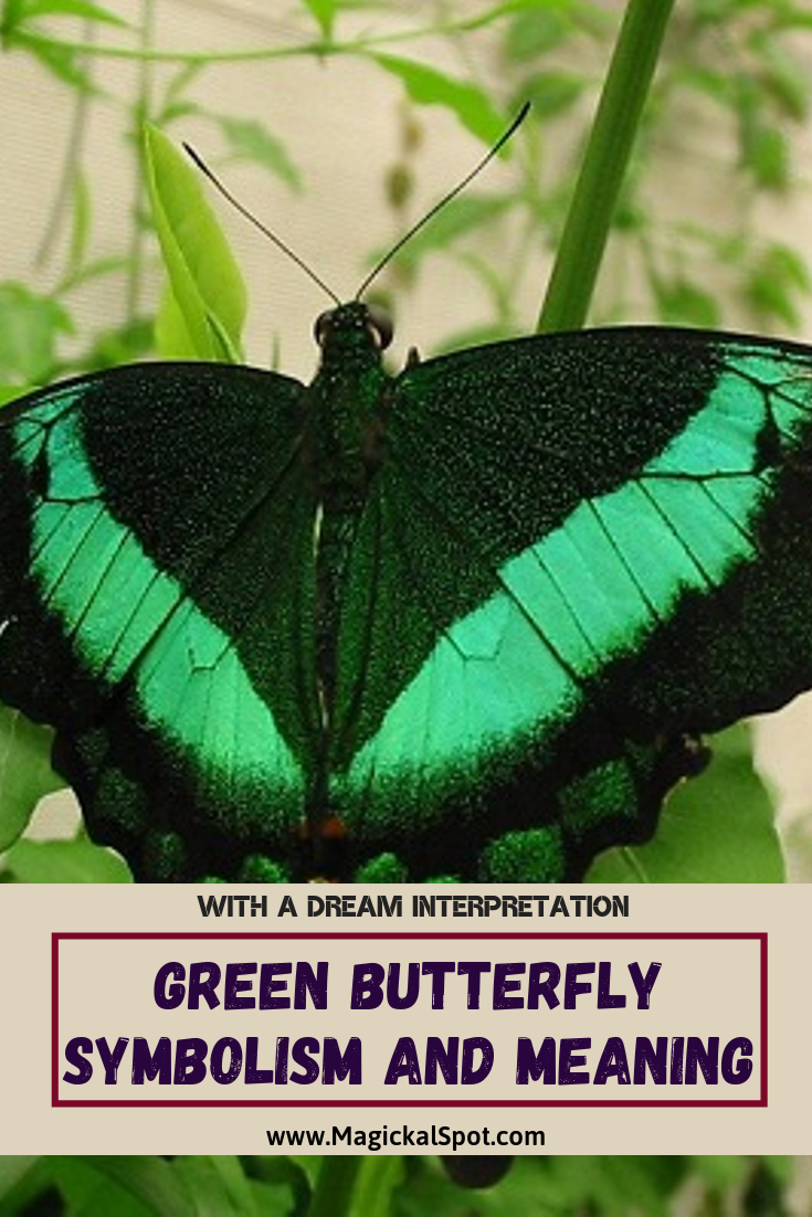 Green Butterfly Symbolism and Meaning by MagickalSpot