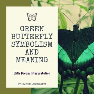 Green Butterfly Symbolism and Meaning featured