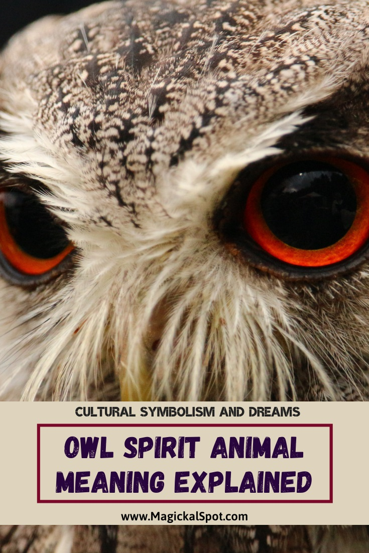 Owl Spirit Animal Meaning Explained by MagickalSpot