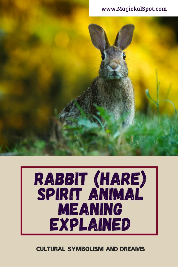 Rabbit Spirit Animal Meaning Explained by MagickalSpot