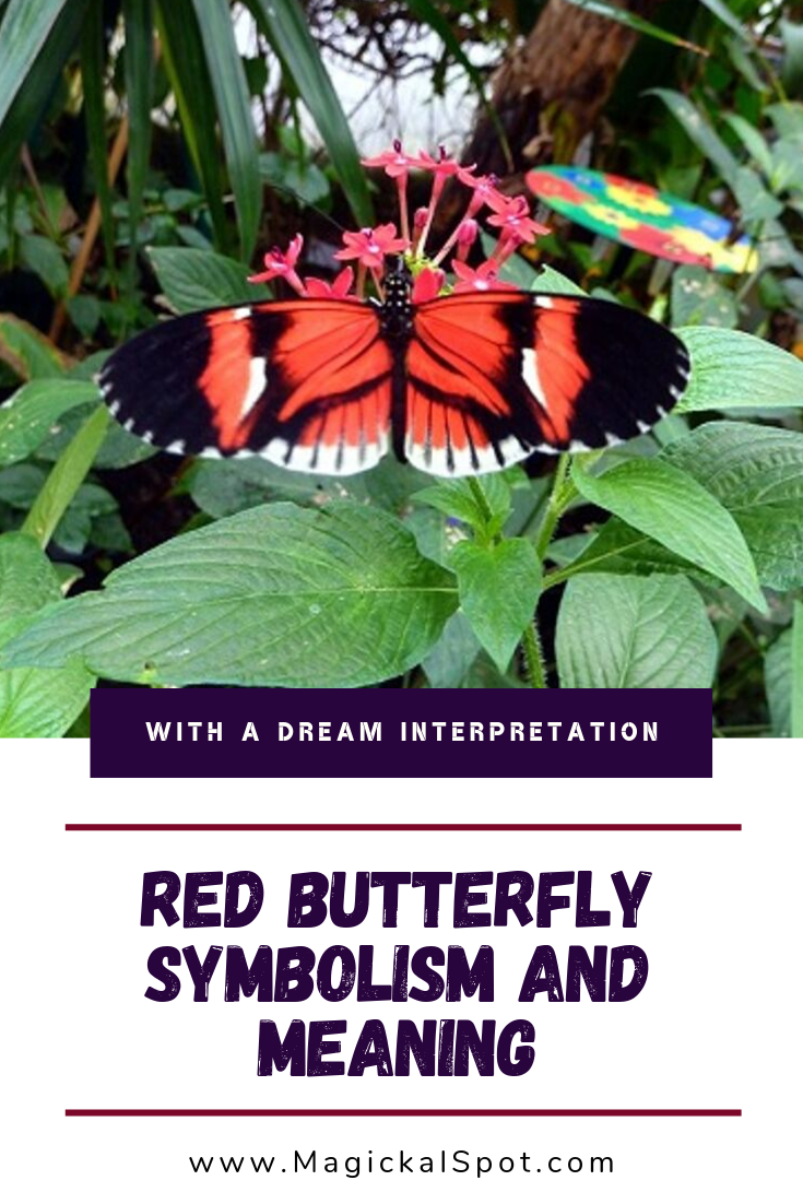 Red Butterfly Symbolism and Meaning by MagickalSpot