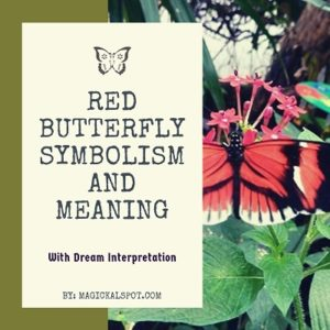 Red Butterfly Symbolism and Meaning featured