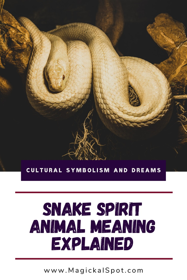 Snake Spirit Animal Meaning Explained by MagickalSpot