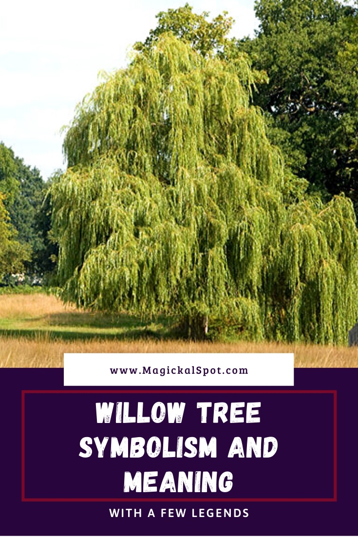 Willow Tree Symbolism and Meaning Explained by MagickalSpot