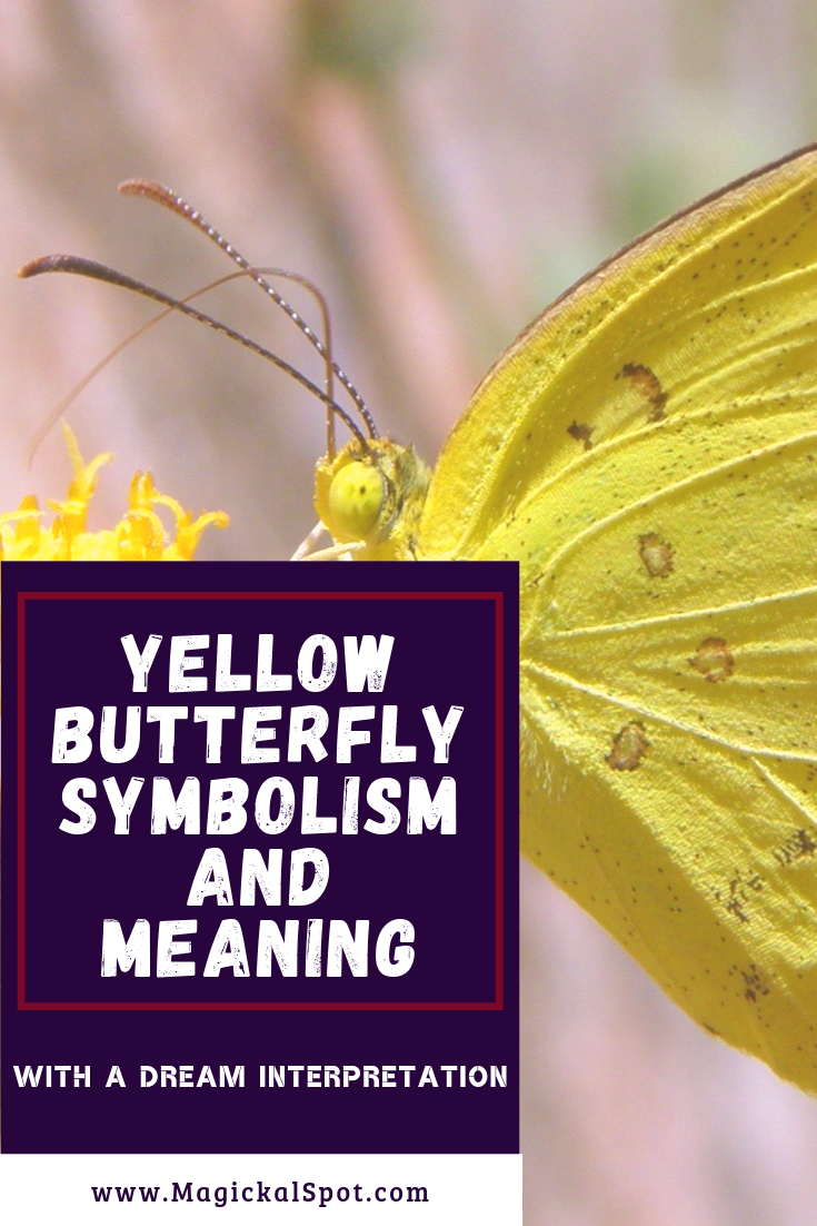 Yellow Butterfly Symbolism and Meaning by MagickalSpot