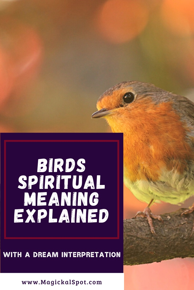 Birds Spiritual Meaning Explained by MagickalSpot