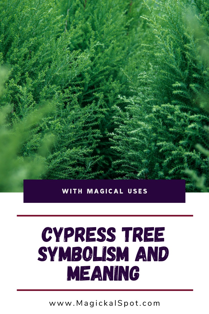 Cypress Tree Symbolism and Meaning by MagickalSpot