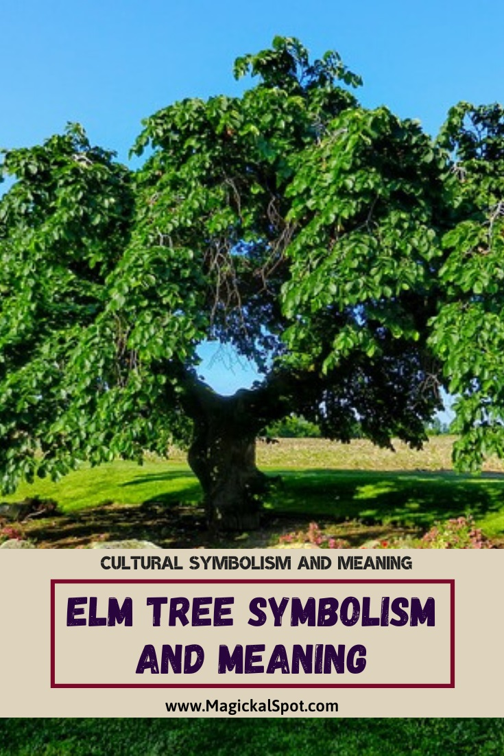 Elm Tree Symbolism and Meaning Explained by MagicalSpot