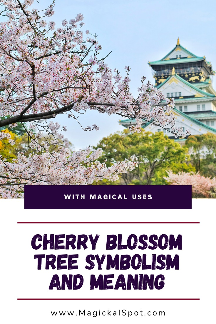 Japanese Cherry Blossom Symbolism and Meaning by MagickalSpot