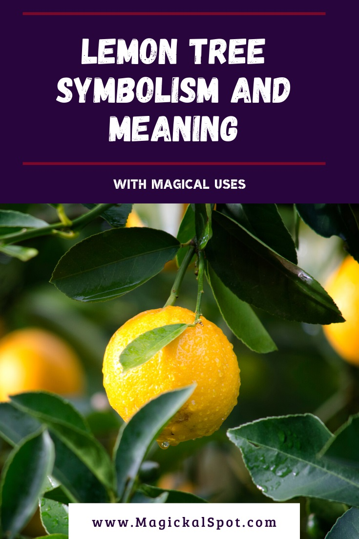Lemon Tree Symbolism and Meaning Explained by MagickalSpot