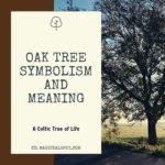 Oak Tree Symbolism and Meaning featured