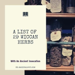 A List of 29 Powerful Wiccan Herbs featured