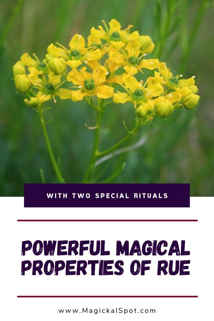 Rue Magical Properties by MagickalSpot
