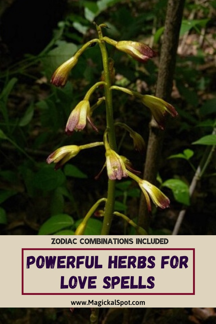 Powerful Herbs for Love Spells by MagickalSpot
