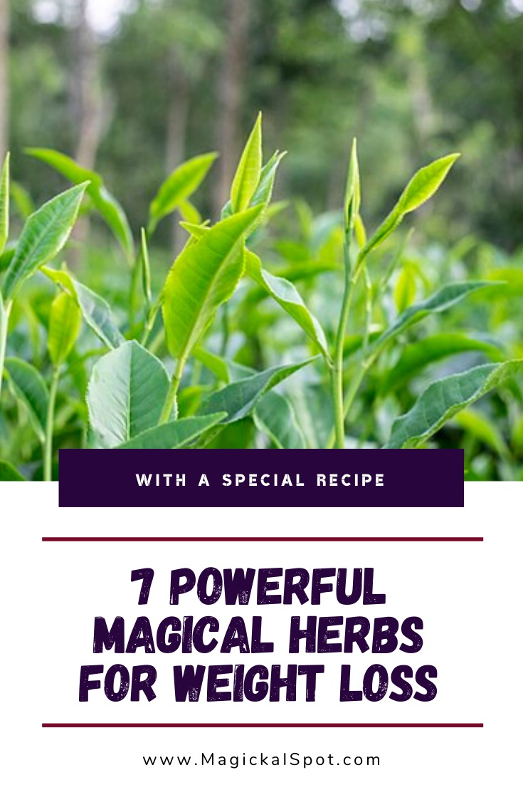 Magical Herbs for Weight Loss by MagickalSpot