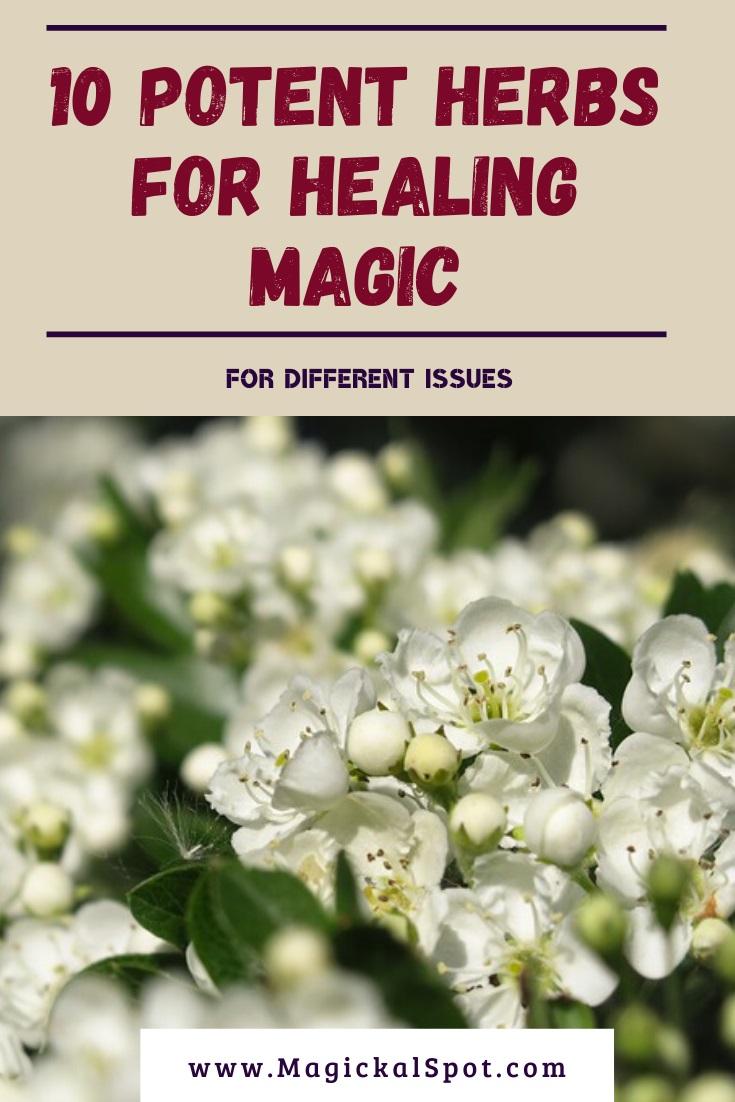 Potent Herbs for Healing Magic by MagickalSpot