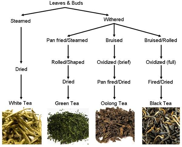 Tea_production