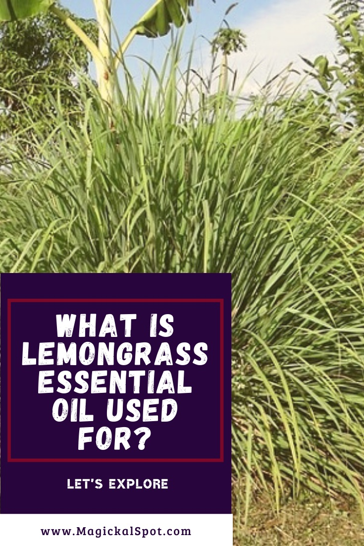 What is Lemongrass Essential Oil used For by MagickalSpot