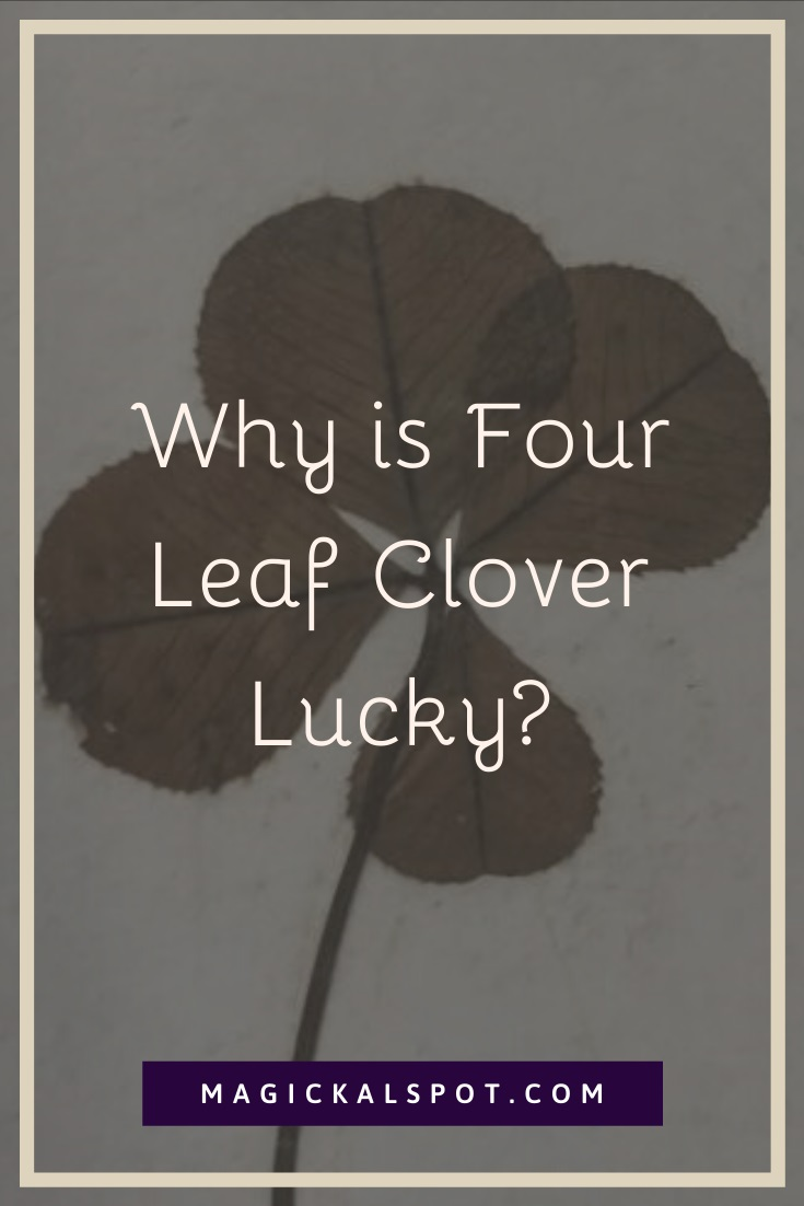Why is Four Leaf Clover Lucky by MagickalSpot