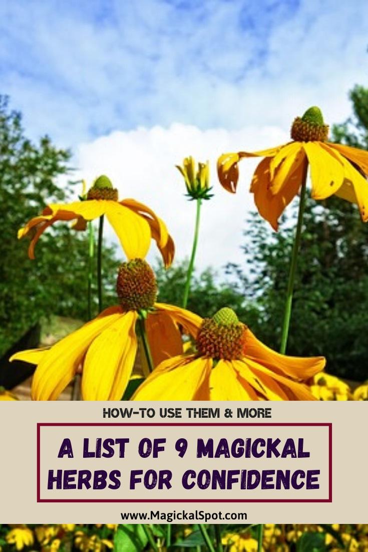 A List of 9 Magickal Herbs for Confidence by MagickalSpot