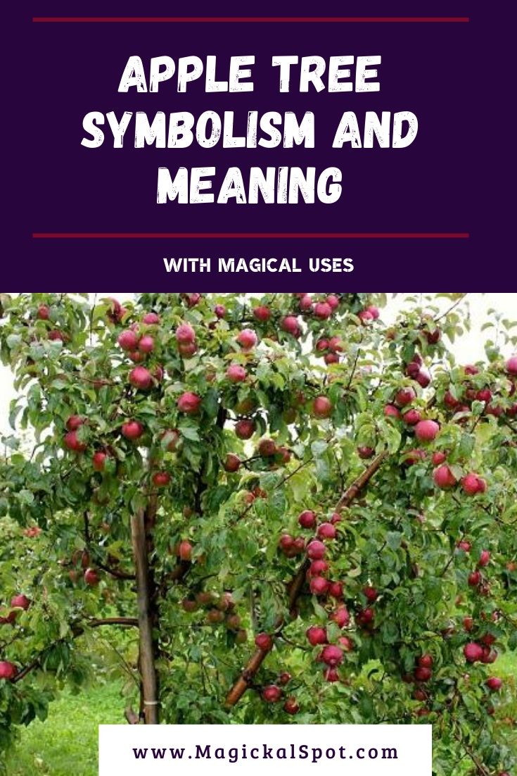 Apple Tree Symbolism and Meaning by MagickalSpot