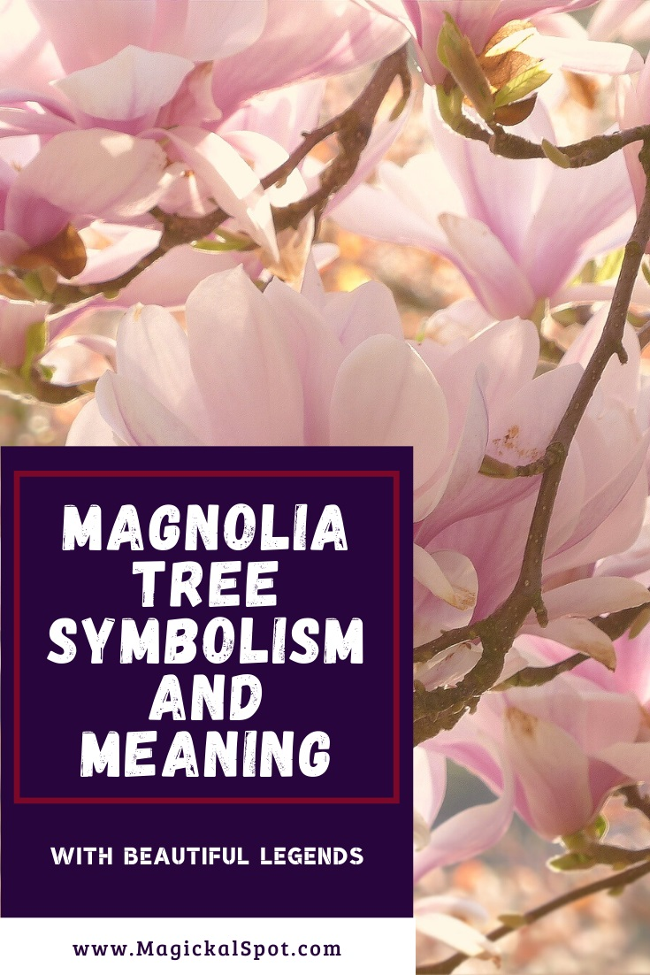 Magnolia Tree Symbolism and Meaning by MagickalSpot