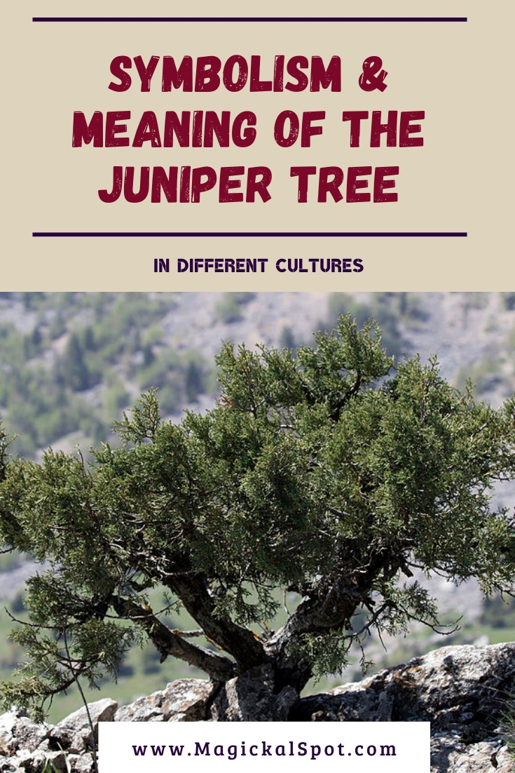 Symbolism & Meaning of the Juniper Tree by MagickalSpot