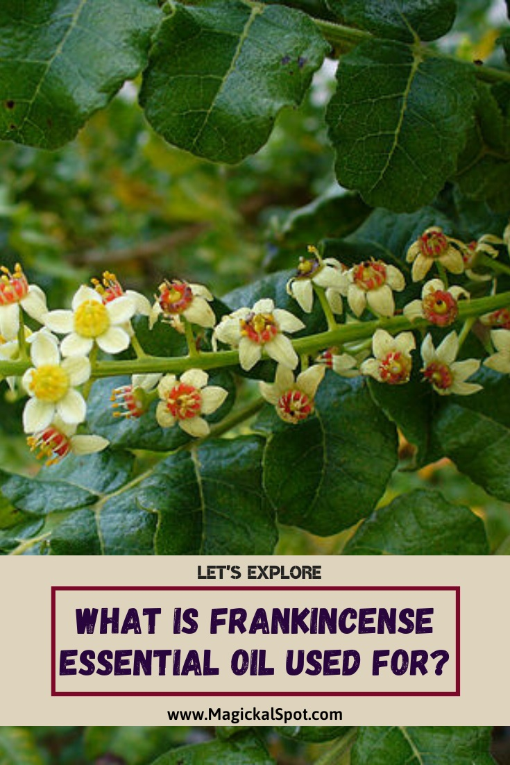 What is Frankincense Essential Oil used for by MagickalSpot