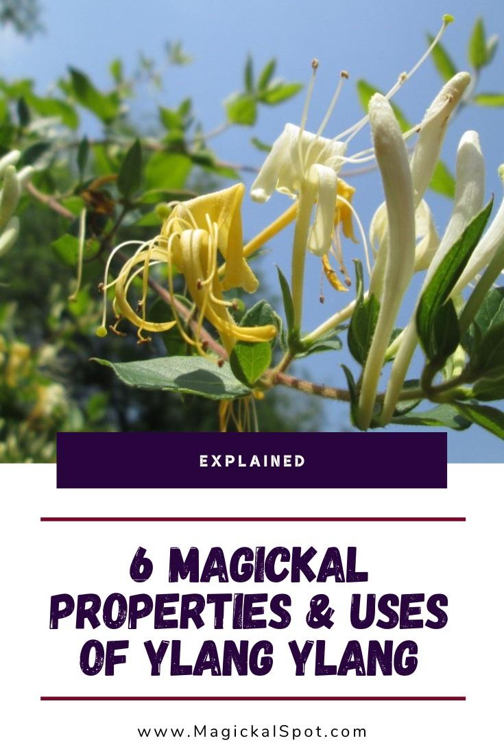 6 Magickal Properties & Uses of Ylang Ylang by MagickalSpot