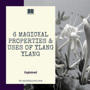 6 Magickal Properties & Uses of Ylang Ylang featured