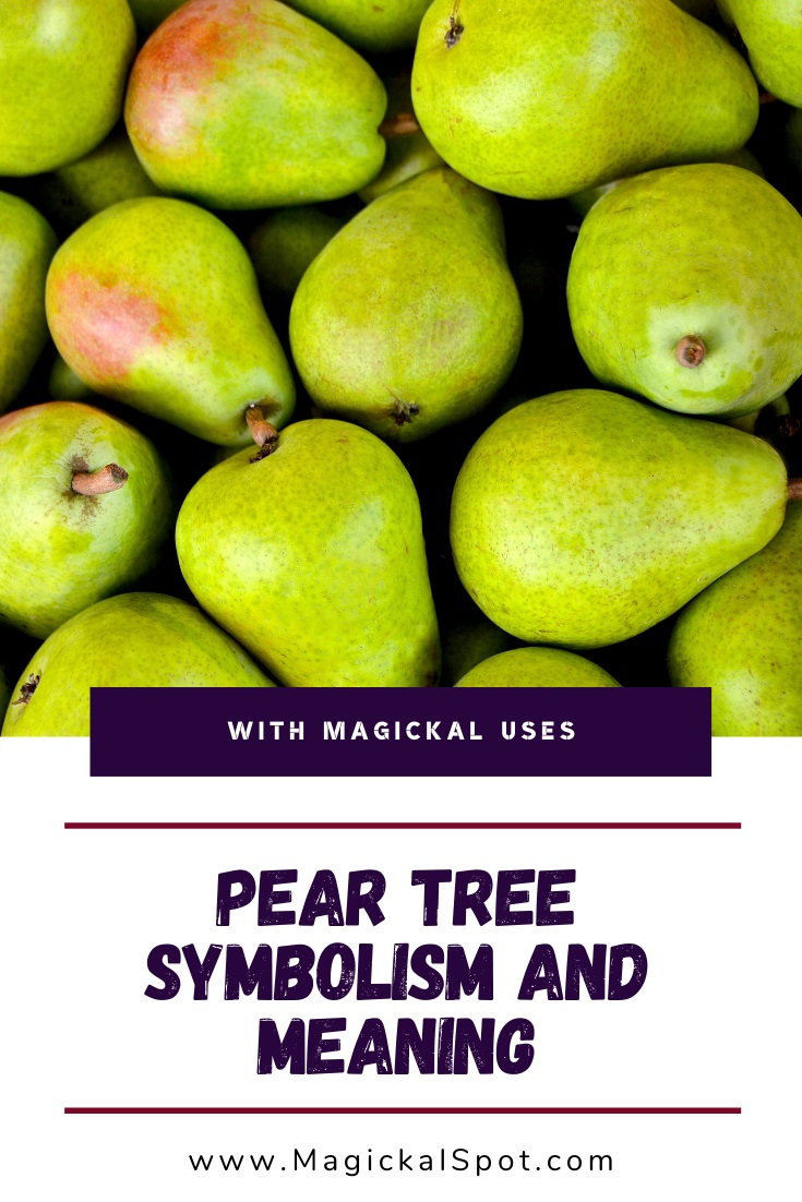 Pear Tree Symbolism and Meaning by MagickalSpot