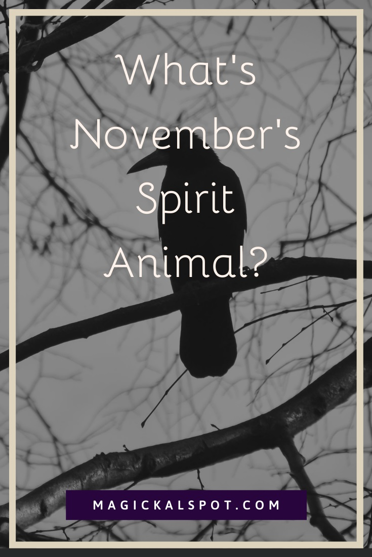 What is November Spirit Animal by MagickalSpot