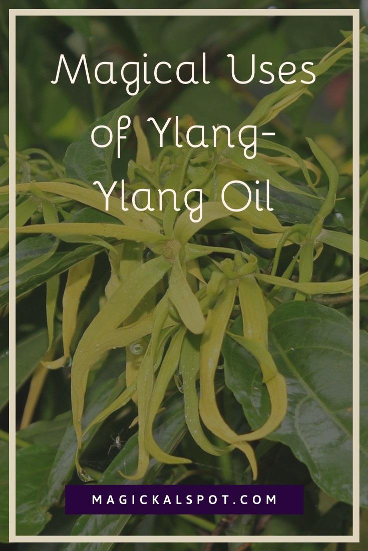 Magical Uses of Ylang-Ylang Oil by MagickalSpot