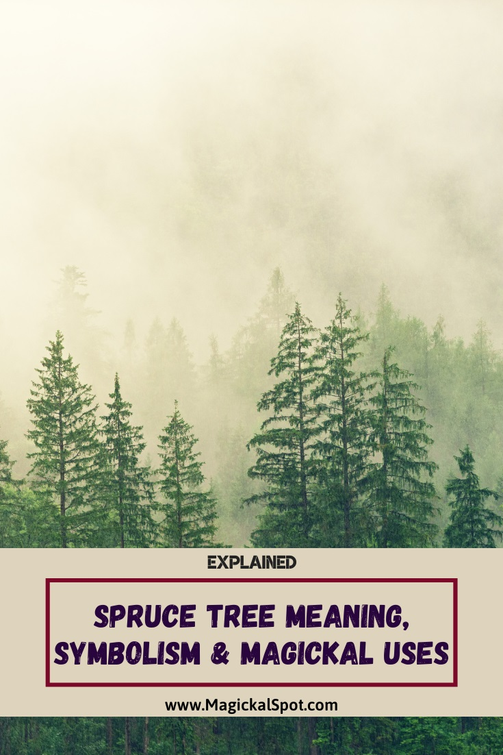 Spruce Tree Meaning by MagickalSpot