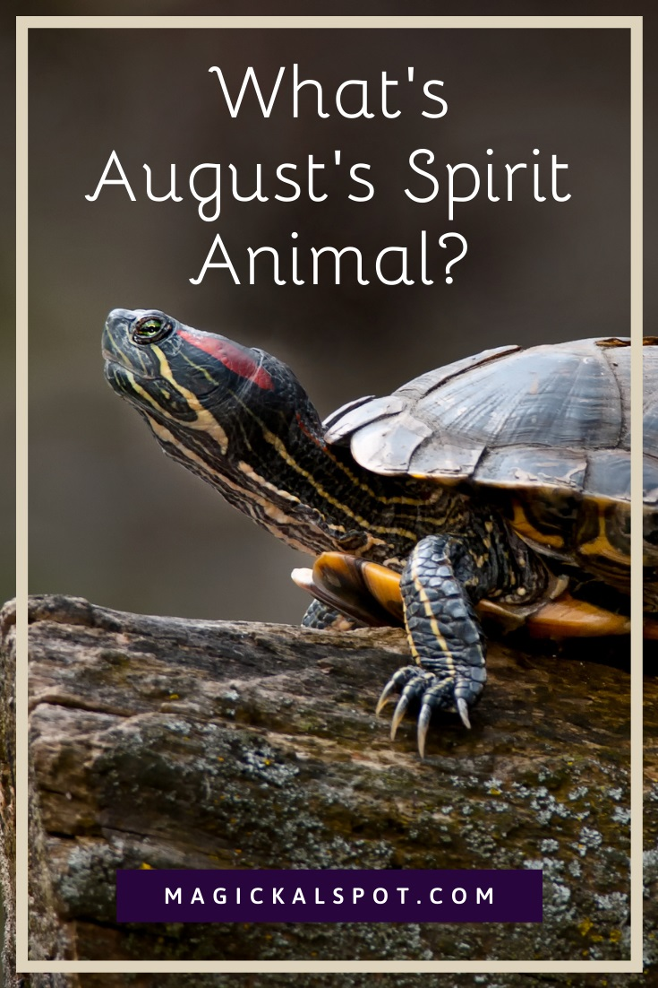 What's August's Spirit Animal by Magickal Spot